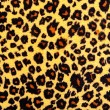 Stock Photo: Leopard skin texture.