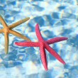 Starfish in the water — Stock Photo