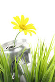 Aluminum can with growing daisy flower on the green grass — Stock Photo