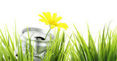 Green eco banner. Aluminum can with growing daisy flower — Stock Photo