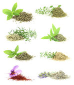 Herbs and spices collection — Stock Photo