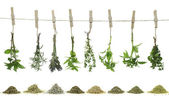 Fresh herbs hanging on a rope — Stock Photo