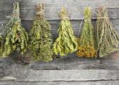 Variety of dried herbs on an old wooden background — Stock Photo