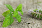 Fresh mint on wooden background — Stock Photo