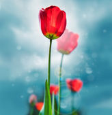 Beautiful retro style photo of tulips against sky. Growing busin — Stock Photo