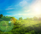 Beautiful landscape with grass, trees, sky and sun. — Stock Photo
