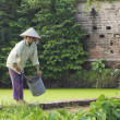 Vietnamese Farmer tending crops — Stock Photo