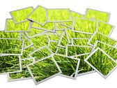 Fotoframe met groen gras in foto 's — Stockfoto