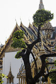 Thailand, Bangkok, Imperial Palace, Imperial city, one of the trees in the Palace garden and ornaments on the roof of a temple — Stock Photo