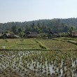 Stock Photo: Thailand, Chiang Mai, view of the Karen Long Neck Hill Tribe village and rice fields