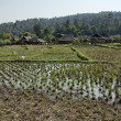 Thailand, Chiang Mai, view of the Karen Long Neck Hill Tribe village and rice fields — Stock Photo #11380075