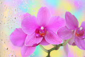 Orchid under wet glass — Stock Photo
