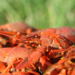 Boiled crayfish — Foto Stock