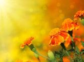 Flor de tagetes — Foto de Stock