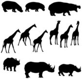 Hippo giraffe rhino — Stock Vector