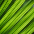 Royalty-Free Stock Photo: Tropical leaf
