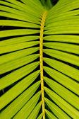 Tropical leaf — Stock Photo