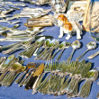 Stock Photo: Bric-a-brac market with cutlery
