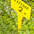 Thyme with price - Foto Stock