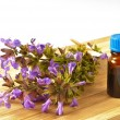 Bunch of sage with herbal tincture — Stock Photo