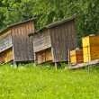 Bee hives — Stock Photo #11980248
