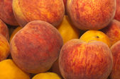 Bulgarian harvest peaches — Stock Photo