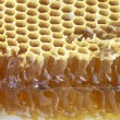 Honeycomb with honey — Stock Photo #11797110