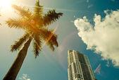 Green palm tree on blue sky background — Stock Photo