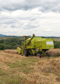 Green combine harvesting — Stock Photo