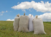 Sacks with wheat — Stock Photo