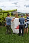 小麦の収穫期 — ストック写真