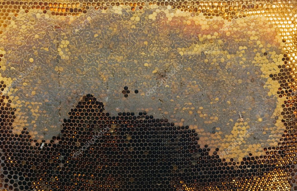 A bee honeycombs close up — Lizenzfreies Foto #12340316