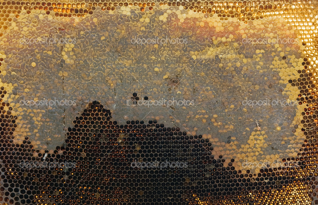 A bee honeycombs close up — Foto de Stock   #12340316