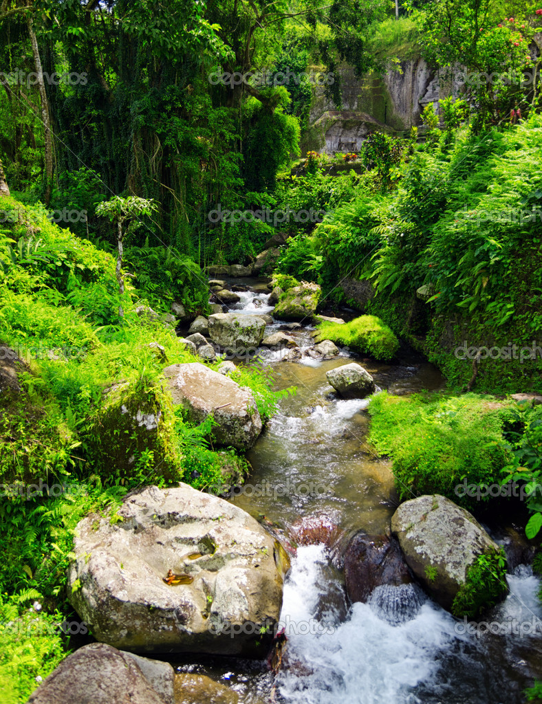 Stream in the tropical forest.  Stock Photo #11248845