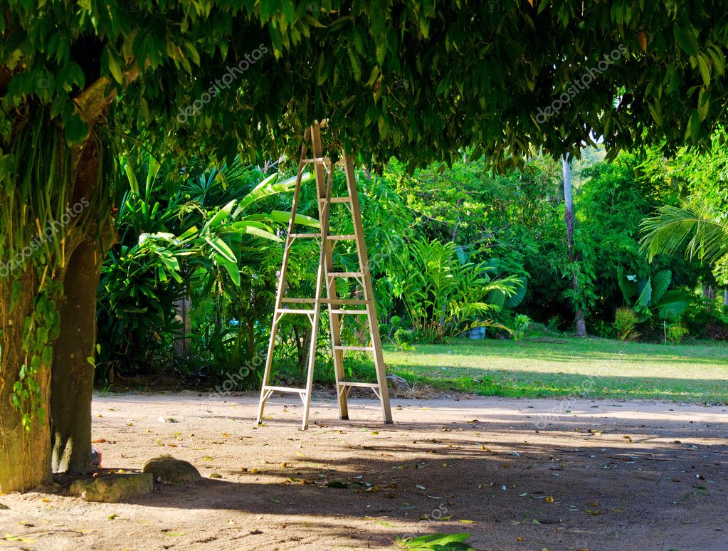 Ladder under a big tree. — Stock Photo #11248851