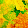 Maple leaves — Stock Photo #11456648