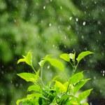 Rain — Stock Photo #11579041