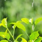 Rain — Stock Photo #11611943