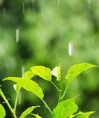 Rain — Stock Photo