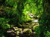 Córrego — Foto Stock