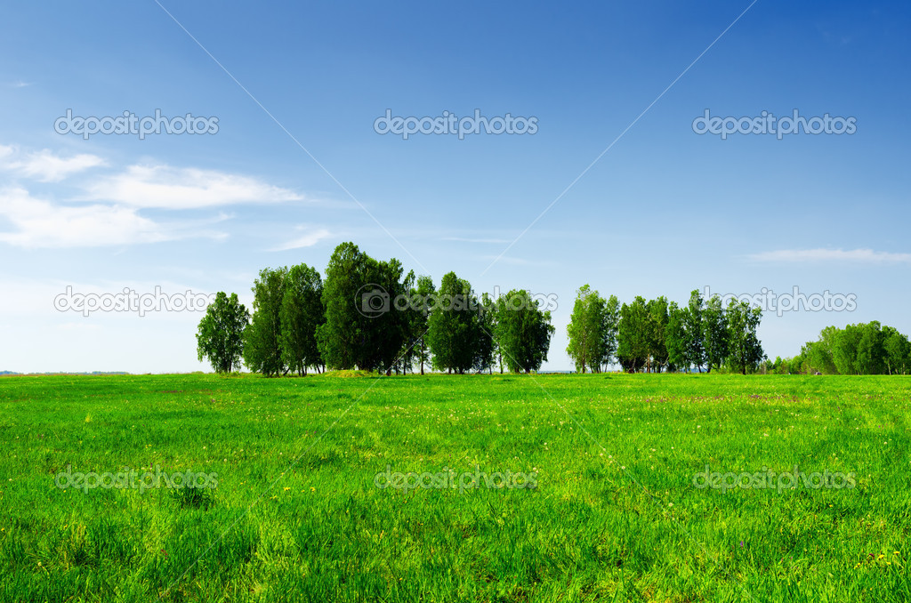 Green grass and blue sky. Summer landscape. — Stock Photo #12308721