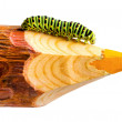 Caterpillar — Stockfoto #12336573
