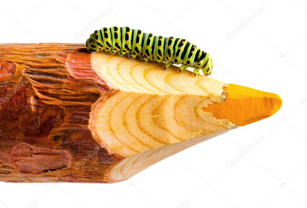 Green caterpillar on wooden pencil. — Stock Photo #12336573