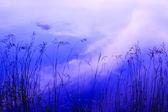 Silhuetas de grama na água — Foto Stock