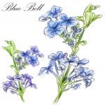 Blue Bell Flower — Stock Vector