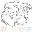 Stock Vector: Long Haired Ragdoll Cat