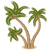 Three Palm Tree Group — Stock Vector