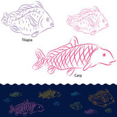 Tilapia and Carp Fish Set — Stock Vector