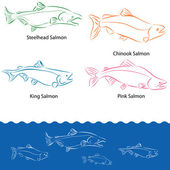 Types of Salmon — Stock Vector