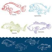 Bass Fish Types — Stock Vector